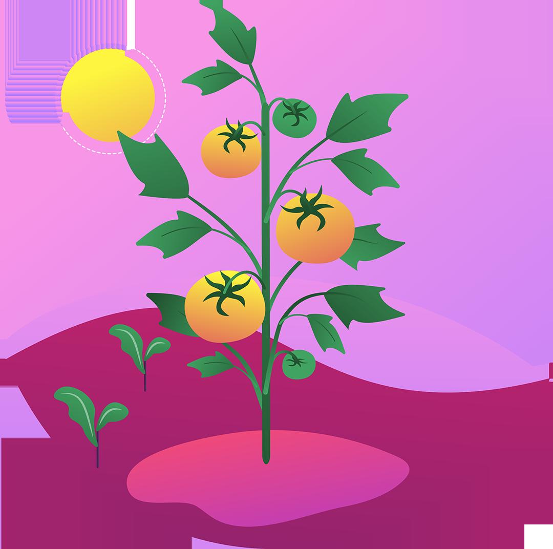 Organische groei voor content
